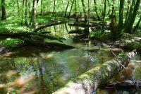 Bulau21_GS_Naturnaher_Gewässerlauf_der_Lache