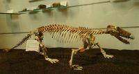 03_Korbacher_Dackel_Säugetierähnliches_Reptil_Procynosuchus